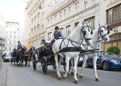 Touristenattraktion in Wien: Eine Fahrt mit dem Fiaker