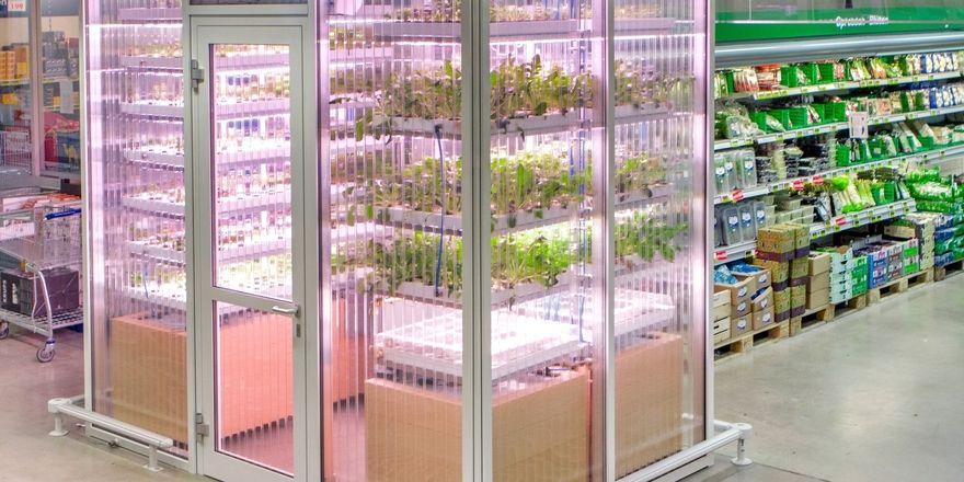 Kräutergarten im Großmarkt: Trotz der kleinen Fläche sollen alle Pflanzen optimal mit Licht und Nährstoffen versorgt werden