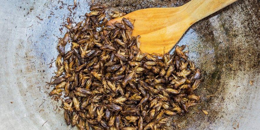 Viele Proteine: Insekten gelten als gesund. Metro vertreibt sie allerdings in Form von Nudeln und Salat-Croutons