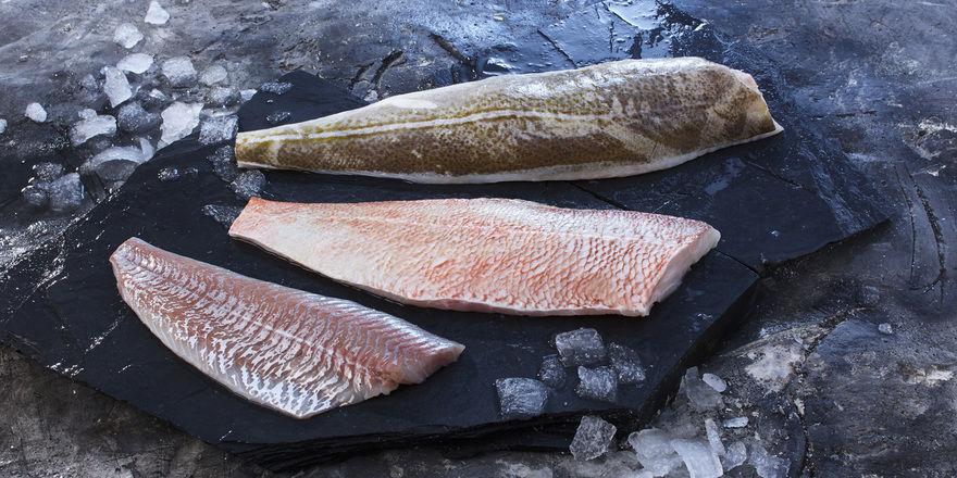 Feine Filets: Deutsche See ist von der Qualität der isländischen Fische überzeugt