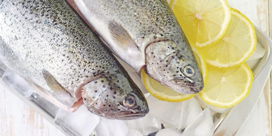 Verderbliches Eiweiß: Das Einhalten einer lückenlosen Kühlkette ist bei Fisch und Fleisch besonders wichtig.