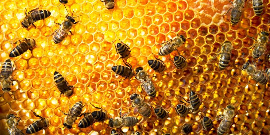 Bienen: Die Natur braucht sie