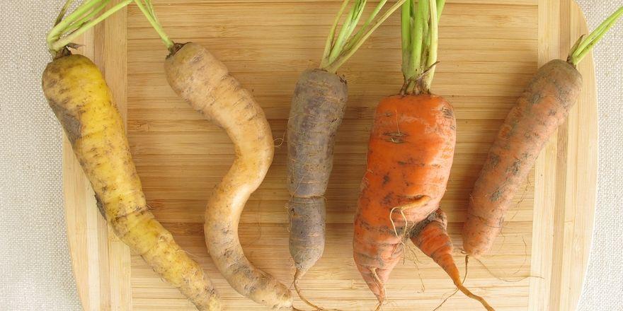 Zu gut zum Wegwerfen: Too Good to Go soll Lebensmittelmüll reduzieren