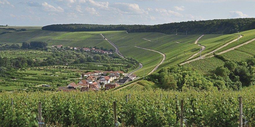 Heimat bester Silvaner: Die fränkische Spitzenlage Escherndorfer Lump oberhalb des Mains