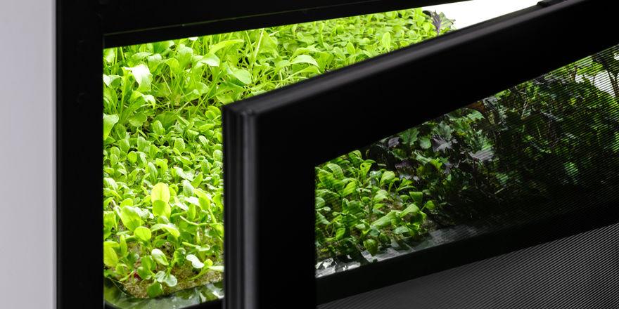 Pflanzen aus dem Kühlschrank: So sieht das Miniatur-Gewächshaus von Agrilution aus