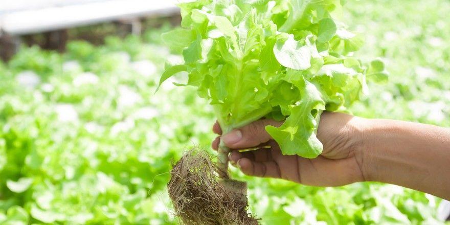 Von Anbau direkt auf den Teller: So sieht es das Konzepte des Vertical Farming vor