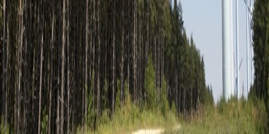 Stören Urlauber Windparks? Hoteliers im Schwarzwald haben ihre Gäste gefragt