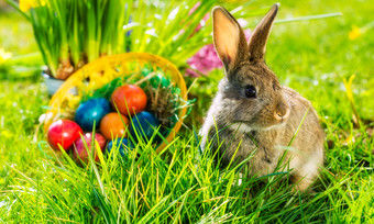 Die Hasen sind los: Die Redaktion wünscht tolle Ostertage