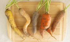 Muss nicht in die Tonne: Krummes Gemüse kann auch verwendet werden
