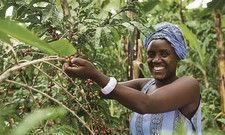 Humane Bedingungen in der Erzeugerländern: Darauf verlassen sich Gastronomen und Verbraucher, wenn sie Kaffee mit Fairtrade-Siegel kaufen.