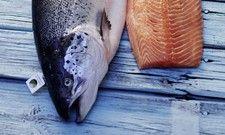 Fisch in Top-Qualität: Das will Deutsche See auch als Teil der Parlevliet & Van der Plas-Gruppe liefern
