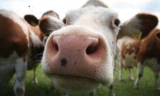 Das Wohl der Tiere: Darum geht es der Schweisfurth Stiftung