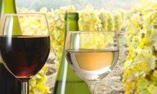 Vielfältiger als man denkt: Deutsche Weine haben viel zu bieten