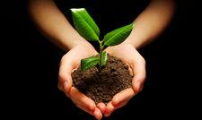 Für das Klima: Best Western arbeitet mit dem Start-up B'n'Tree zusammen