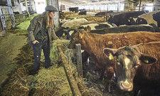 Prominente Bio-Bäuerin: Sarah Wiener mit ihren Rindern auf Gut Kerkow