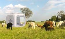 Erfolgreiches Konzept: Der sleeperoo-Würfel, hier auf einer Alpakafarm in Brandenburg, erschließt weitere Spots