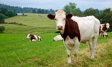 So soll's sein: Der Verbraucher bevorzugt Tiere von der Weide