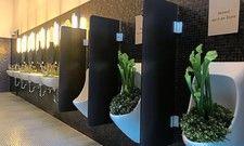Abstand durch die Blume: Im Restaurant Fredi im Casinotheater Winterthur wurden Blumen in Pissoirs und Waschbecken gepflanzt, damit die Gäste Abstand halten.
