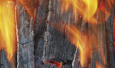Nachwachsende Energie: Holz verbrennt CO2-neutral