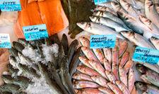 Vom Aussterben bedroht: Viele Fischarten in den Weltmeeren